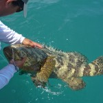 Jewfish | goliath Grouper