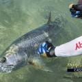Tarpon Fishing Report