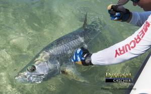 Florida Keys Tarpon Fishing