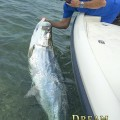 Tarpon Season Begins