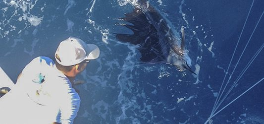 Key West Charter boat sailfish