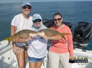 Yellowtail Snappers after hurricane