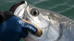 Tarpon, fishing, gloves, aftco, release