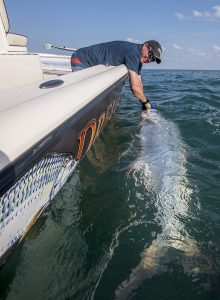 Tarpon, Boatside, release, tarpon fishing, dream catcher charters, Steven Lamp