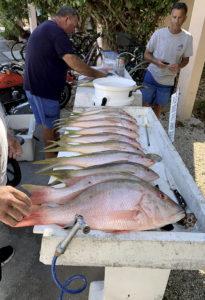 Florida Keys reef fishing snappers
